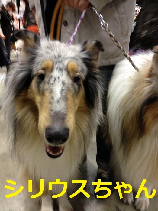 東京ビッグサイト6