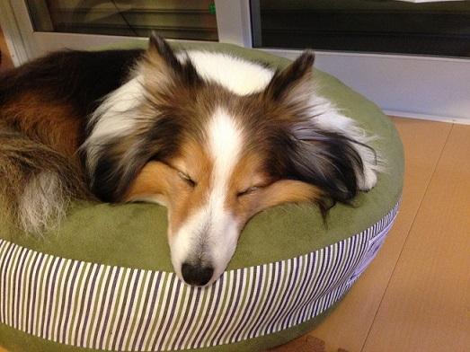 寝てるレオン