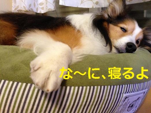 レオン寝る
