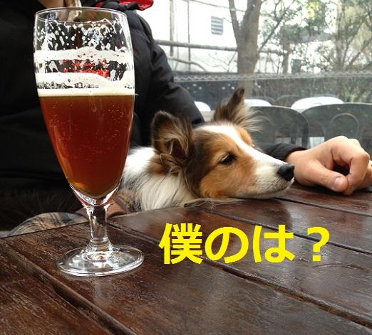 ガーデンハウスビール1