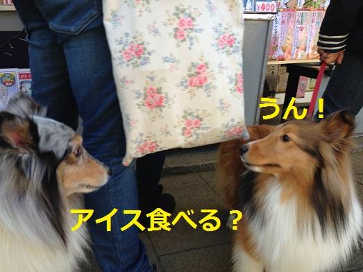 江ノ島散歩8
