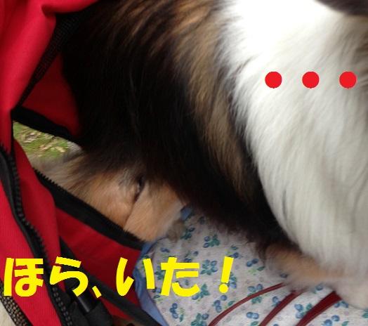 サニシリちゃん6