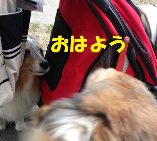 サニシリちゃん5