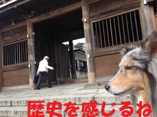 本覚寺11