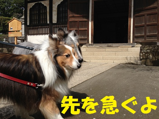 円覚寺41