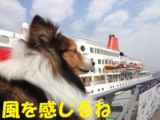 大桟橋31