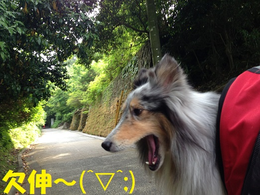 鎌倉散歩1