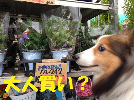 花屋さん2