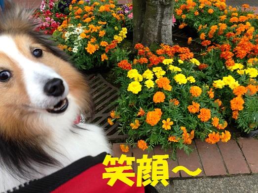 花屋さん1