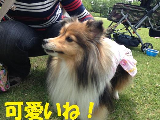 シオンちゃん1