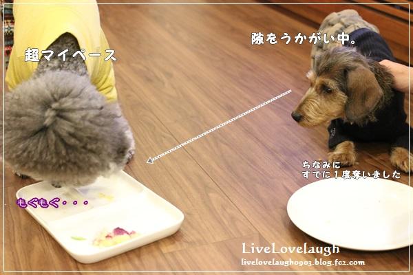 IMG_7882ぼうねん8