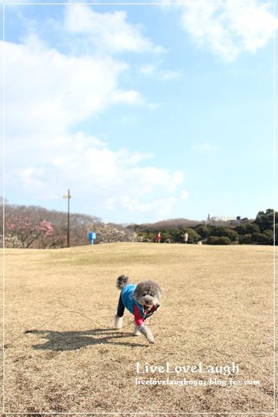 IMG_0891ねぎし1