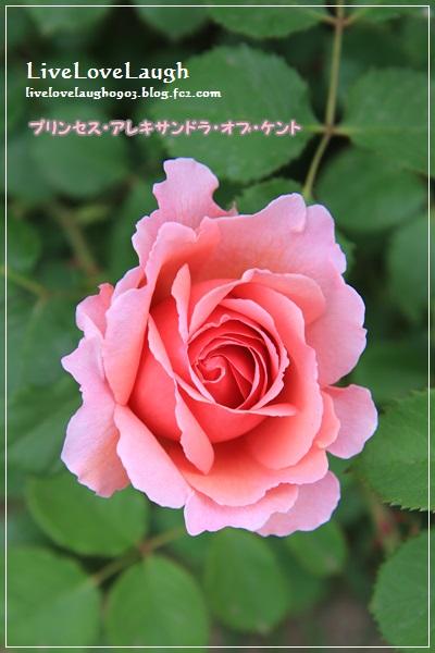 IMG_9394YEG5-19