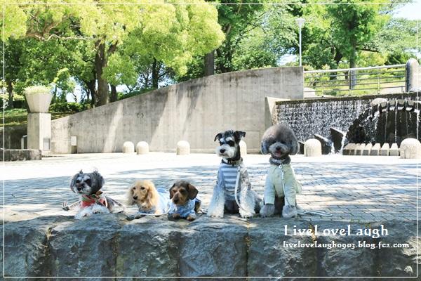 IMG_9593犬@5-5