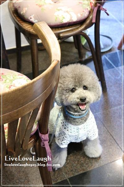 IMG_0374犬6-1