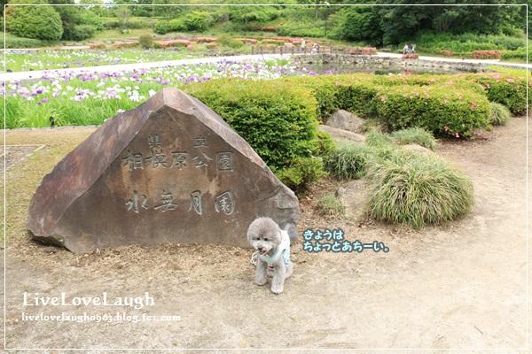 IMG_0793みなづき1