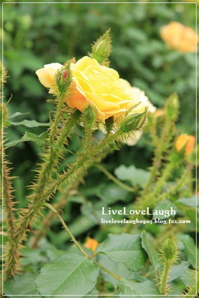 IMG_9306YEG5-12.jpg