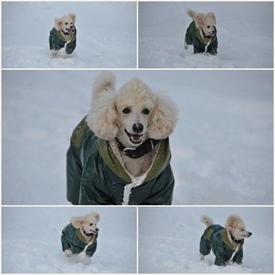 雪好きコテ
