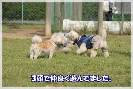 こてむー3頭で遊ぶ