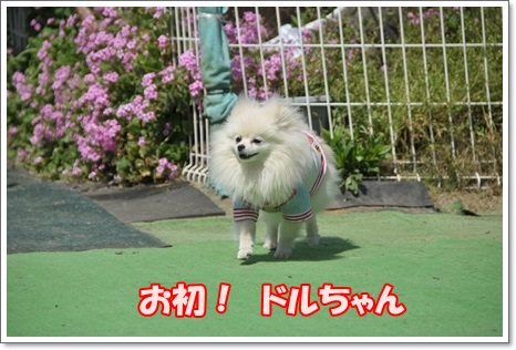 ドルちゃん紹介