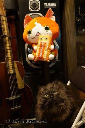 センモニとネコ2匹w