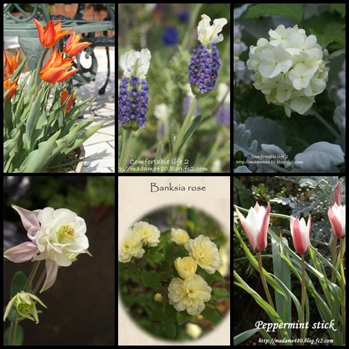 3月4月ガーデン2