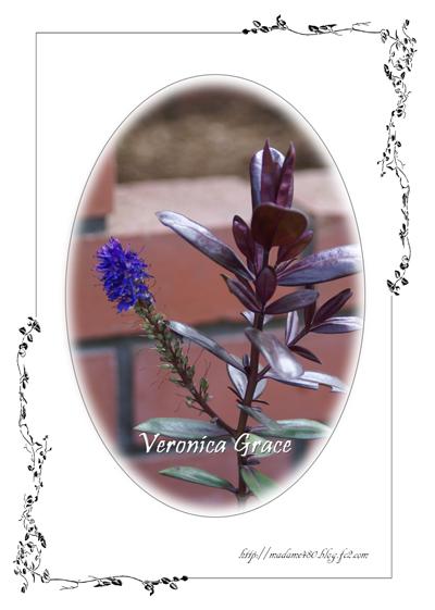 ベロニカ グレース葉色web用A
