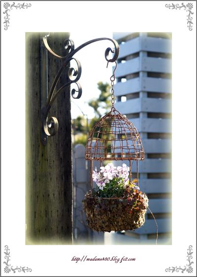鳥かごにビオラ1月末web用