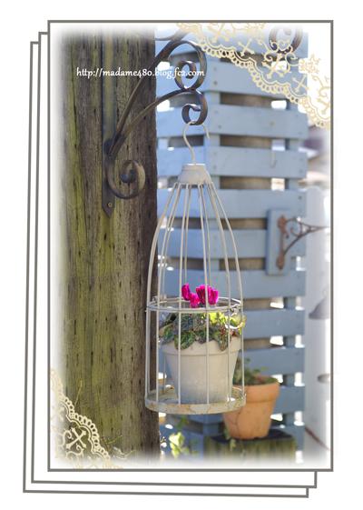 ガーデンシクラメン鳥かご1月末web用