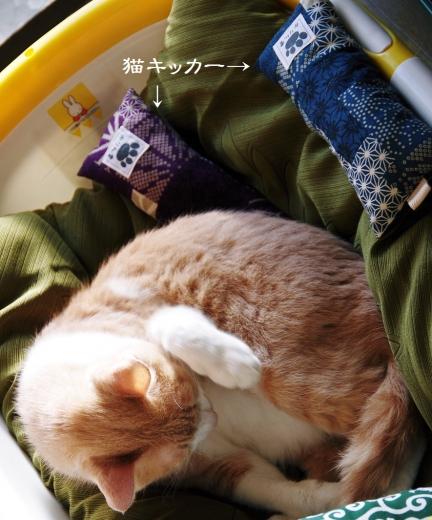 雲丹専務&猫キッカー