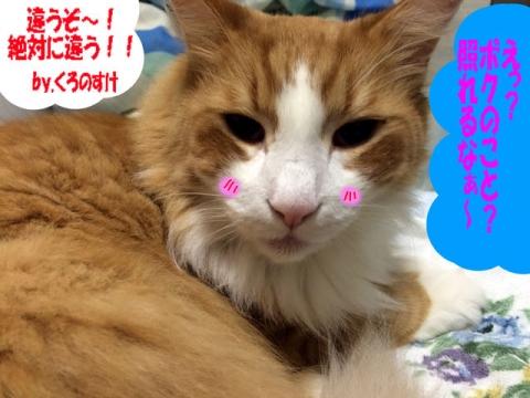 獅子丸しゃんの猫漫画