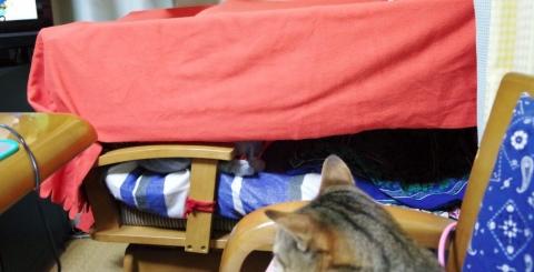 猫のテントドーム