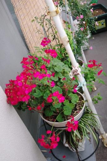 ベランダの花と葉っぱ2015春