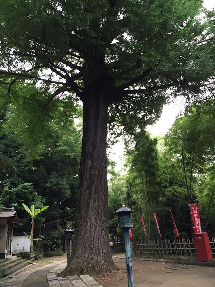 薬師池公園2 - 2