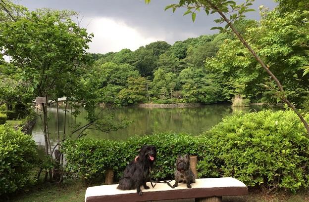 薬師池公園2 - 7