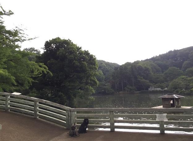 薬師池公園2 - 14
