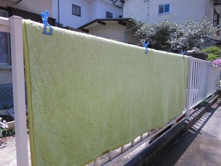 カーペット洗濯1