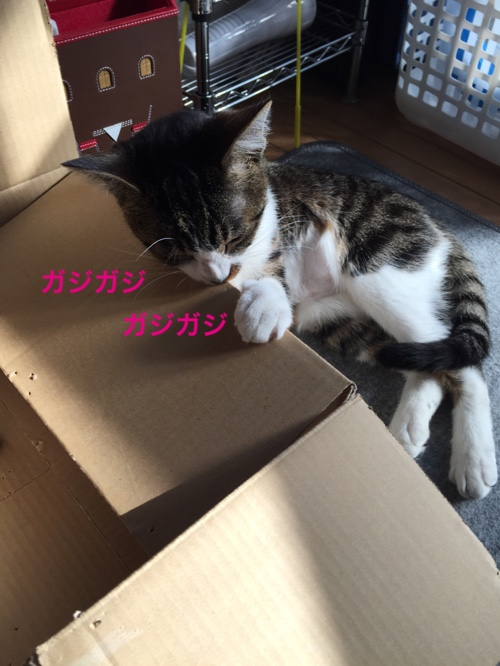 fc2blog_2015022023163249b.jpg
