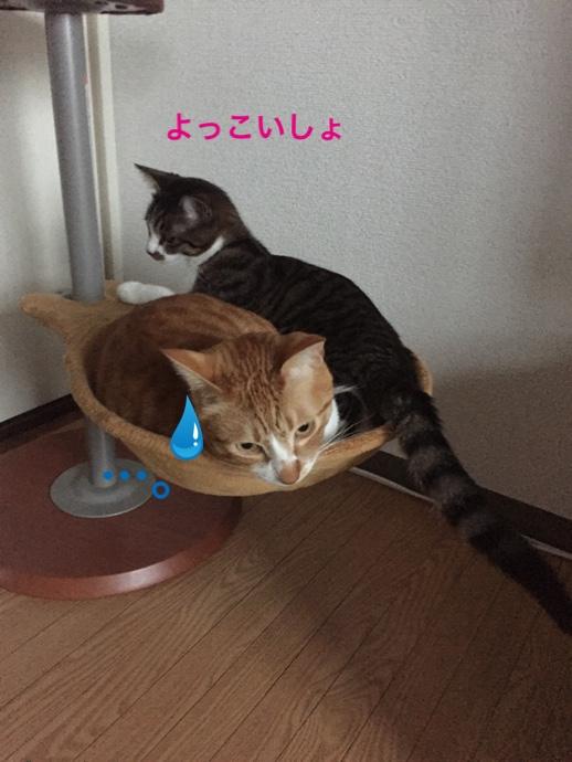 fc2blog_20150223202941536.jpg