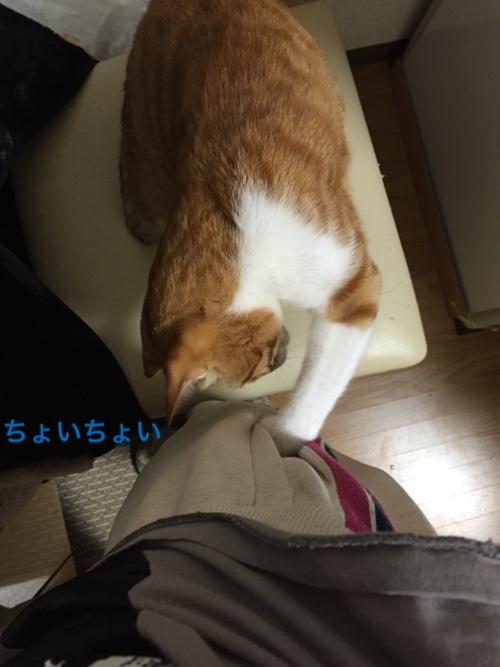 fc2blog_20150420212911ce0.jpg
