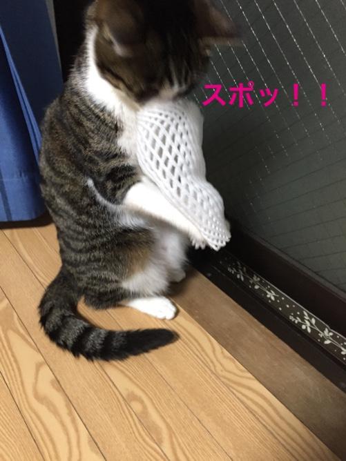 fc2blog_20150429172659fed.jpg