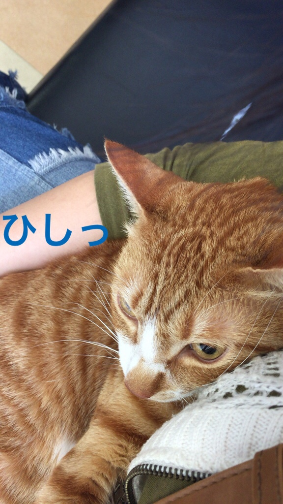 fc2blog_20150529204642765.jpg