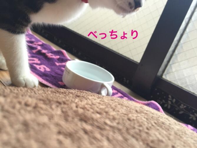 fc2blog_201506211351534c5.jpg