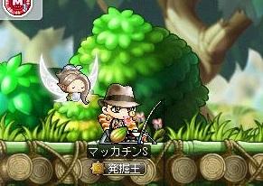 Maple12851a.jpg