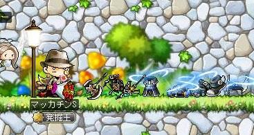 Maple12900a.jpg