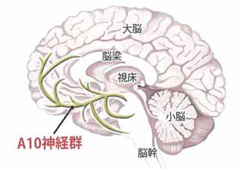 A10神経