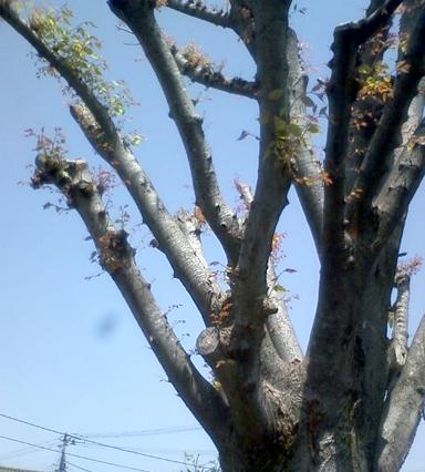 芽吹かない木