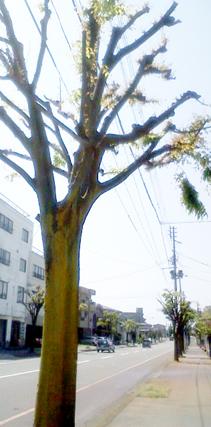 さびしい街路樹