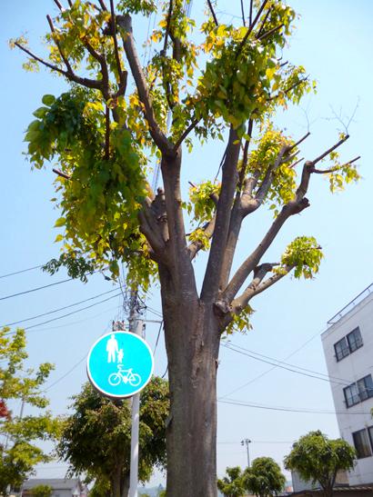 街路樹葉っぱ