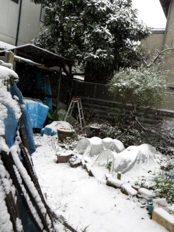 2014_12 18_裏庭の雪